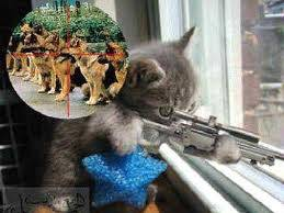 Anak Kucing Ini Mai Nembak Anjing Pakek Sniper Bago Wow! nya dong.....