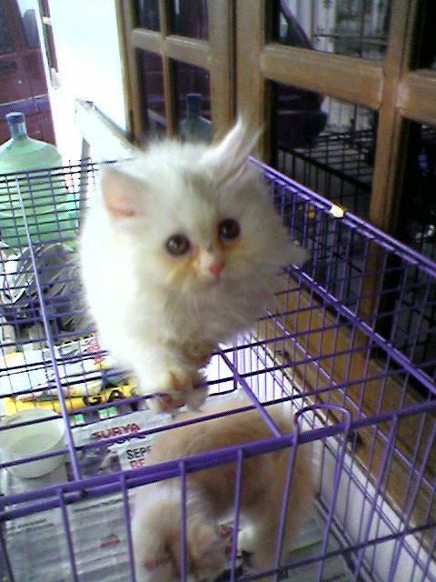aduh imuet nya kucing ini gemesin WOW nya mana?