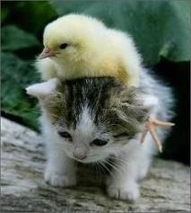 persahabatan antar binatang.... woooow