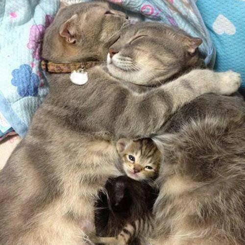 keluarga kucing ini benar-benar harmonis ya....!! Jangan Lupa klik WOW ya...