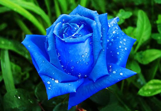 76 Gambar Allah Dan Bunga Paling Bagus