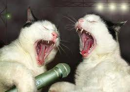 WOW Lets Sing A song boys!!