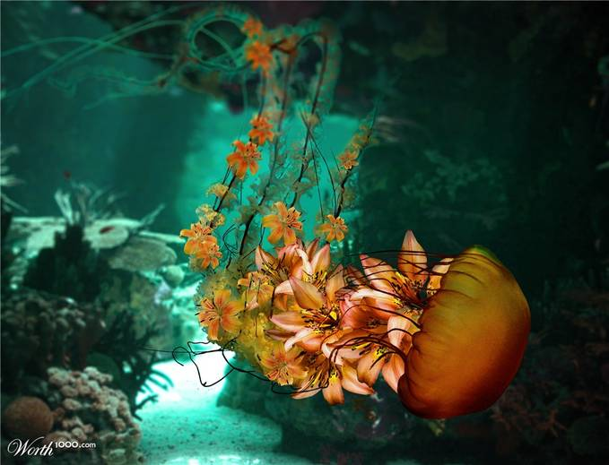 Jelly Fish Flower ..