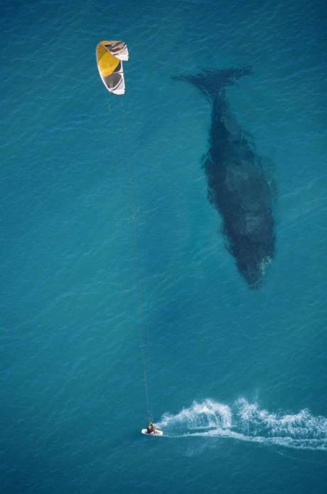 Putting the size of whales into perspective.