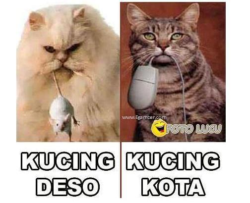 Kucing Ndeso vs Kucing Kota.. :D