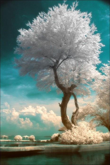 Photography - Infrared