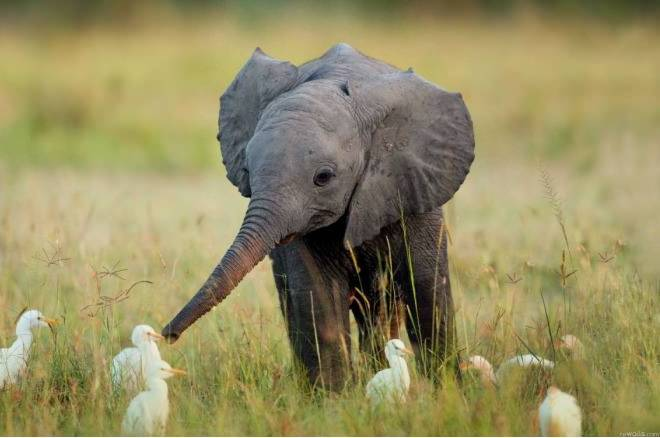 little elephant with friend. (more wow) Best picture ever > http://pulsk.com/187116