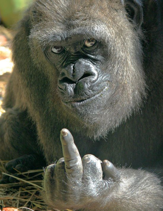 F**k you...