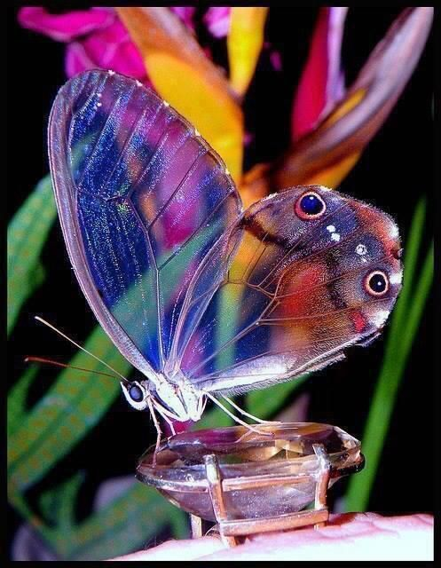 Butterfly glass is so beautiful...