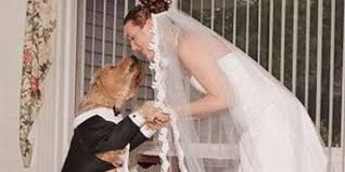 this is love, not for him, dogs married
