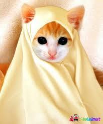 miaw..miaw.. imutnya nih kucing pake kerudung *^^*