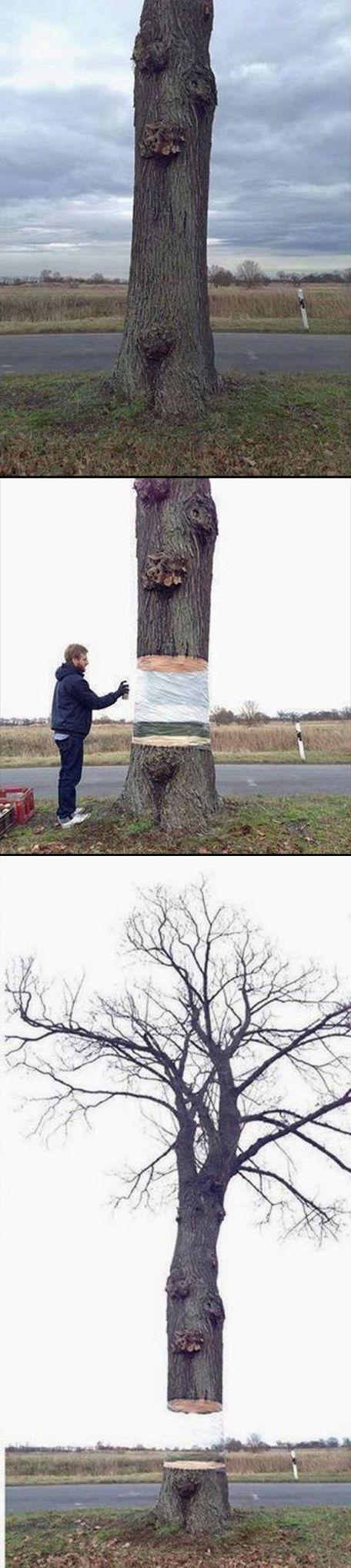 Iseng-isengnya seorang seniman emang beda, pohon tersebut cuma di lukis menyerupai background belakangnya tapi kaya transparan ya hasilnya