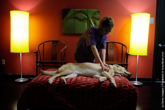 Nih Salah satu fasilitas pemijatan anjing :D