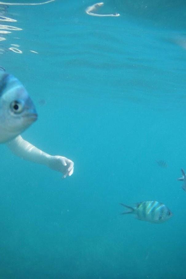 manusia berkepala ikan lagi berenang tuh...