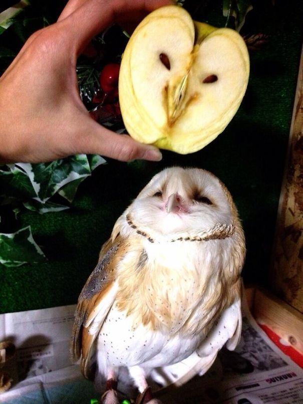 potongan buah apel ini mirip kepala burung hantu alias owl...