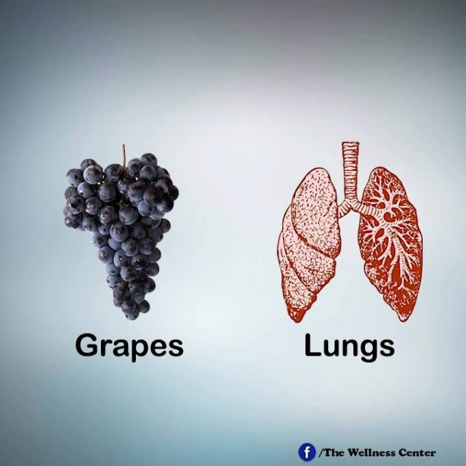 #11 PARU-PARU Kumpulan anggur akan tampak seperti paru-paru yang sedang mengikat udara. Ekstrak biji anggur mengandung proanthocyanidin yang ampuh mencegah kanker paru-paru.