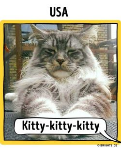 Ternyata Sebutan Untuk Kucing di Setiap Negara Berbeda-Beda Lho