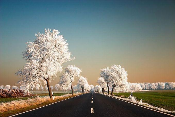 Sebuah jalanan yang ditumbuhi pepohonan dipinggirnya pada saat musim dingin.