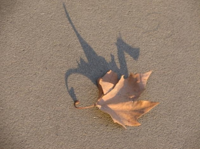 Bayangan daun yang nampak mirip seperti naga.