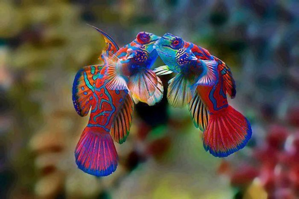 Ngeliat warna-warna ikannya bisa cukup untuk mengurangi rasa stres guys.